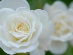 hoa, hương, hinh