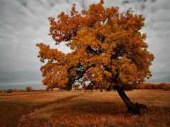природа, осень, дерево