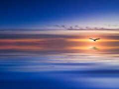 птица, blue, небо