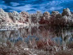 камыш, landscape, natural