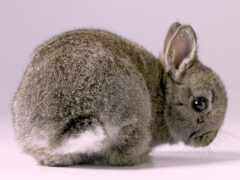bunny, animal, baby