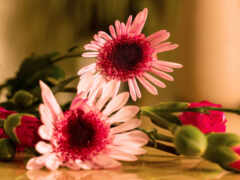 carnation, букет, pretty