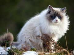 кот, весна, пушистые