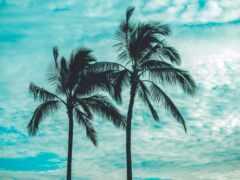 palm, дерево, устройство