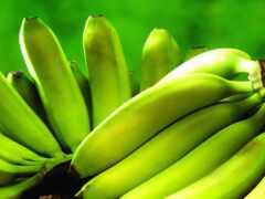 банан, благо, зеленое