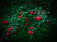 взлёт, цветы, дерево