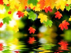осень, красивый, лист