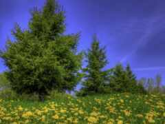 цветы, трава, дерево