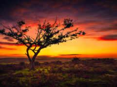 закат, дерево, фон