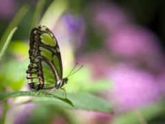 бабочки, бабочка, яndex