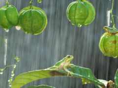 дождь, drops, zhivotnye