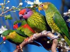 попугай, птица, animal