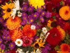 цветы, осень, garden