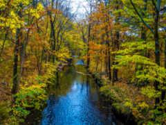 осень, лес, one