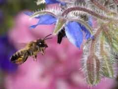 пчелка, мед, hover