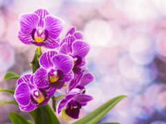 цветы, орхидея, цветение