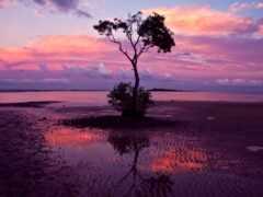 закат, одинокий, дерево