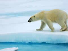 polar, медведей, ну