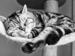 кот, sleeping, заставки