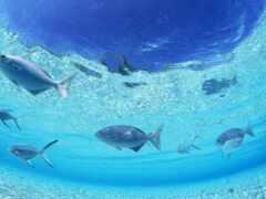 fish, water, ocean