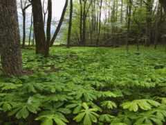 bitki, orman, resimleri