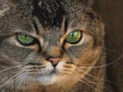 кот, глаз, portrait