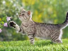 котенок, кот, весна