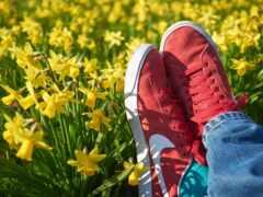 shoe, кеды
