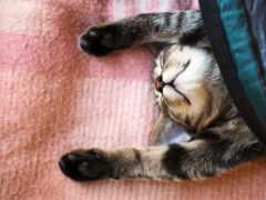 спать, работать, одеяло