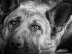 dogs, wallpaper