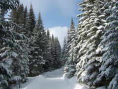 лес, заснеженный, could