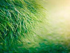 трава, makryi, зелёный
