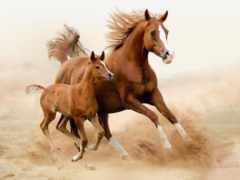 лошадь, лошади, бегущие