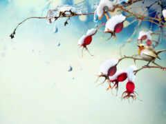 winter, птица, scene