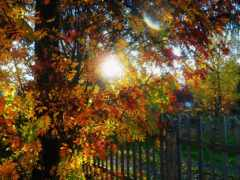осень, забор, дерево