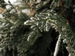 снегом, покрыты, vie