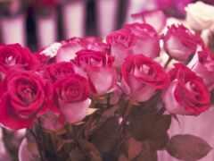 роза, букет, цветы