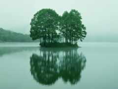 дерево, water, красивый