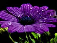 телефон, cvety, квіти