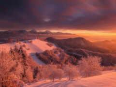 снег, лес, закат