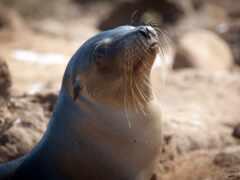 тюлень, marine, море