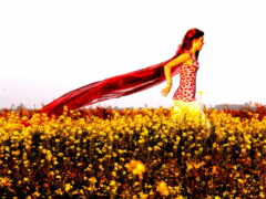 yellow, поле, цветы