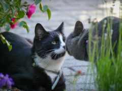 кот, картинка, tags