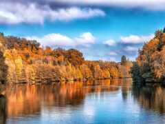 осень, озеро, дерево