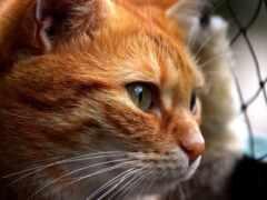кот, news, который