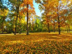 осень, желтые, осенние