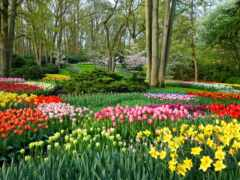 garden, весна, нидерланды
