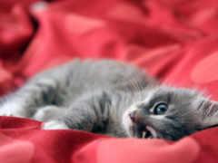 gato, gatos, cama