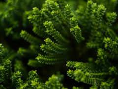 растительность, зеленый