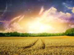 поле, трактор, облако